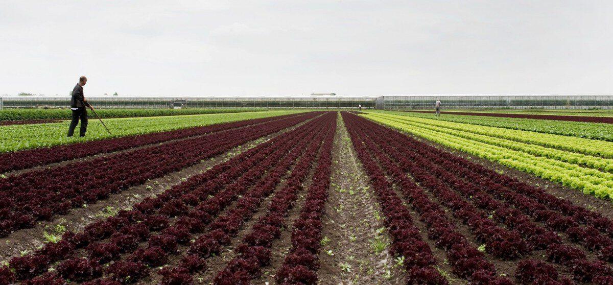 Leningen agrarier